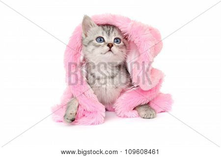 Kitten in a pink fur coat on white background