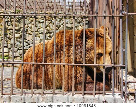 the severity of life in captivity in one glance bear