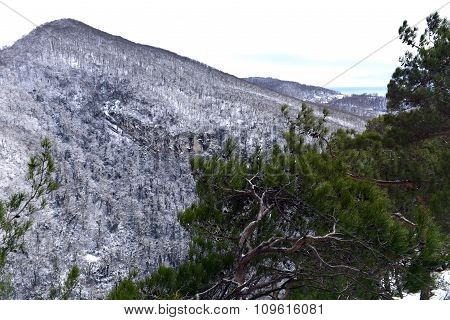 The branches of the trees in the mountains
