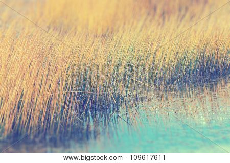 Golden Grass Field In The Lake Selected Focus