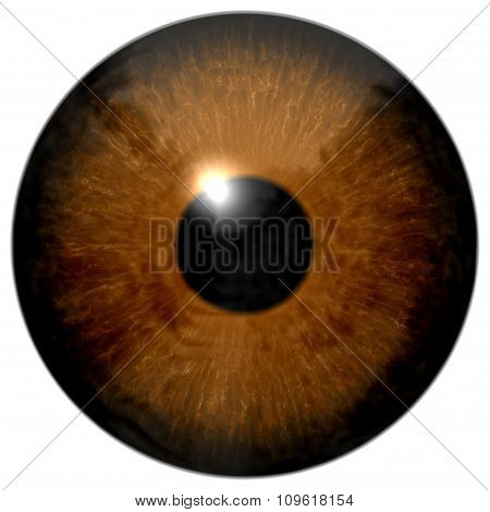 Brown Eye Illustration Isolated On White