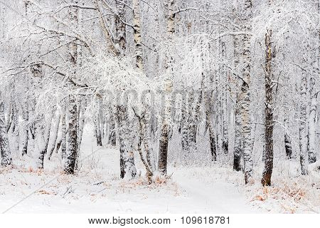 Winter landscape of Siberia