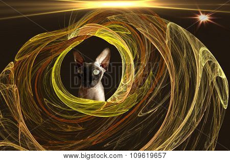 Fractal For Bald Cats