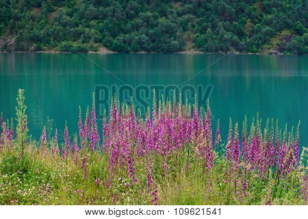 Norway fjord with flowers