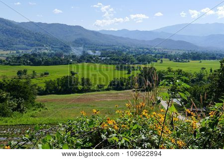 Flowerbed With Mountain And Paddy View