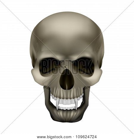 Vampire Skull With Fangs