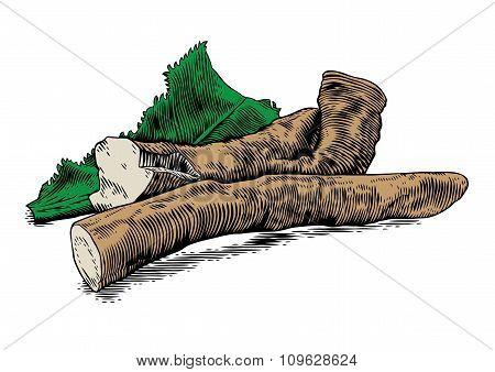 Root Of Horseradish