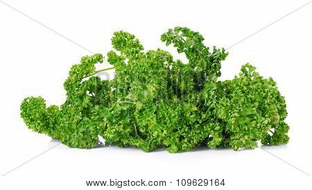 Big Parsley On White Background.