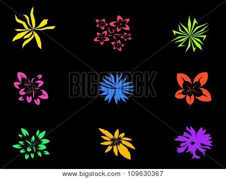 Colorful Flower Isolated On Black Background