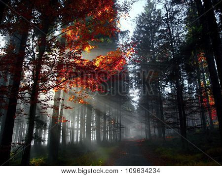The Light In The Morning Forest