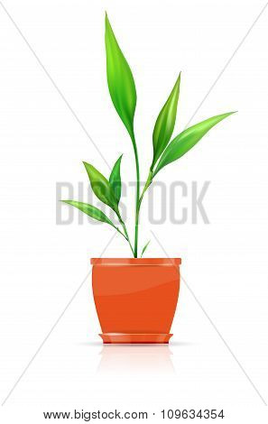 Orange Flowerpot With Growing Plant