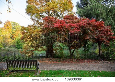 Empty Bench at the Lake in Autumn