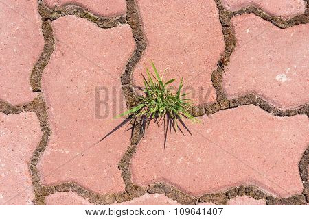 Grass In The Pavement
