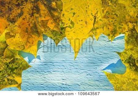 Autumn background of Yellow leaves