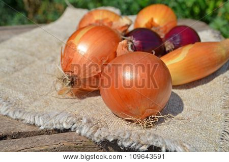 Onions on rustic background