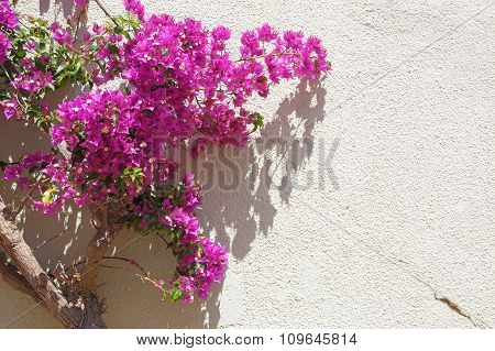 Flowers On Wall