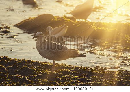 Sea gull at coast