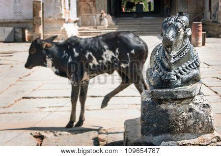 Two Cows: Live And Stone. Virupaksha Temple. Hampi, India.