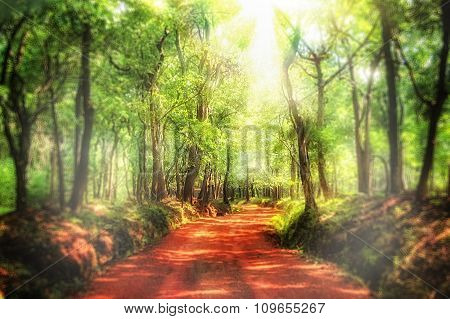 Abstract Winding Road Through A Dense Forest, Made With Color Filters.