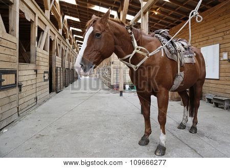 Brown horse in stable rigged with saddle and reins