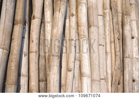 Bamboo Bleached By Sunlight Natural Abstract Image Asia.