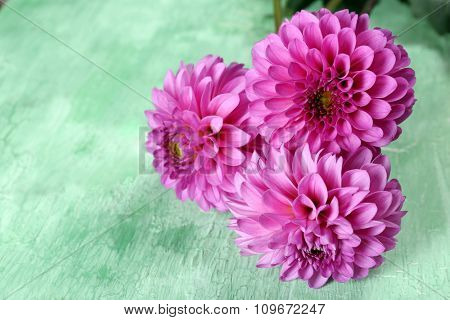 Beautiful asters on wooden background