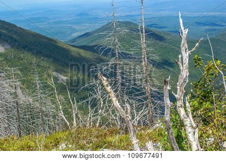 Dry Trunks Of Trees Against The Backdrop Of The Mountains