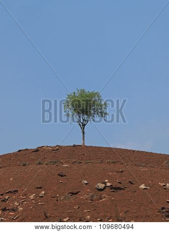 Far view of a lone tree on hill