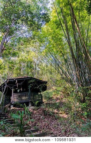Small Hut In The Jungle Surrounder With Bamboo Trees