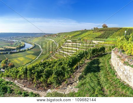 Vineyards at the Neckar