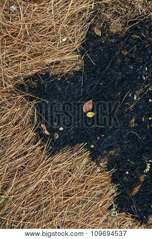 Dry grass and burnt grass