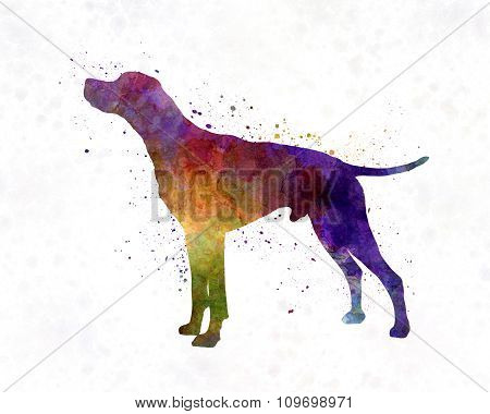 English Pointer In Watercolor