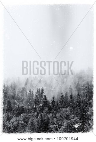 Aged and textured vintage print of an evergreen alpine forest enveloped in swirling mist