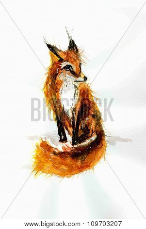 Careless Watercolor Drawing Of Red Fox .