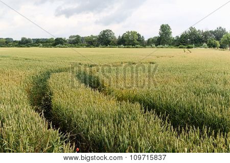 Field With Road And Tracks