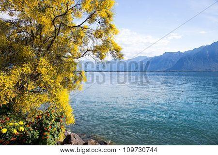 Mountains And Lake Geneva