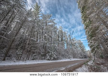 Snow covered pines - beautiful forests along rural roads.