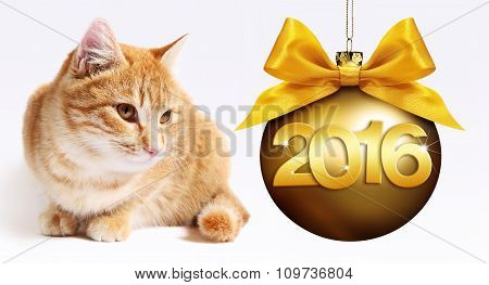 Cat And Christmas Golden Ball, Happy New Year 2016 Golden Text Isolated On White Background