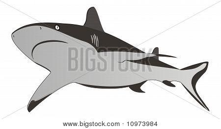 Shark - Dangerous Sea Predator,vector Illustration