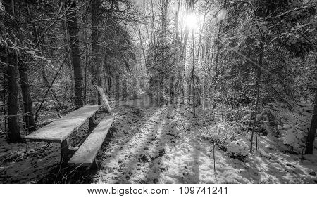 Bench in the woods.