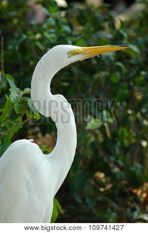 great white heron perched among tree branches