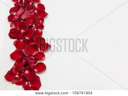 Red Rose Petal On White Background