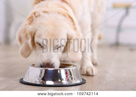 Nice dog eating