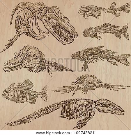 Bones, Skeletons - Water Life Freehands, Vector
