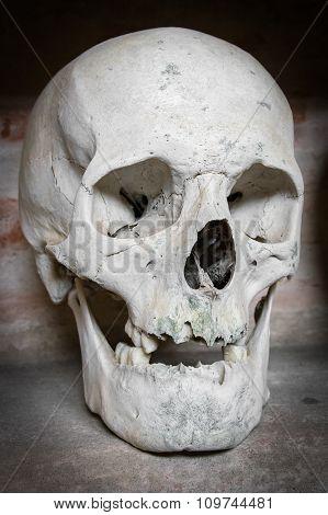 Human Skull Inside A Catacomb.