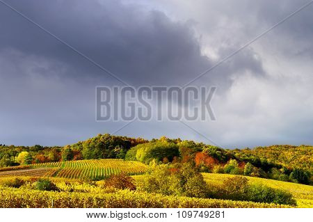 Vivid Colors Of Autumn Vineyards In Andlau, Alsace