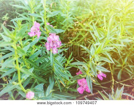 Blossom Lovely Mini Pink Flower In Sun Set Light