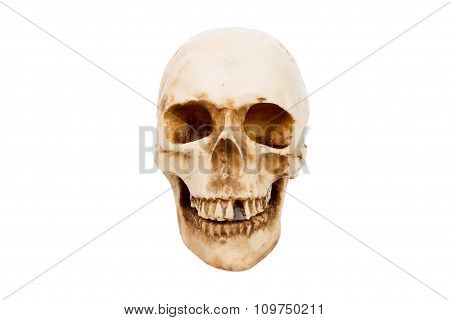 Old Human Skull  Isolated On White Background.