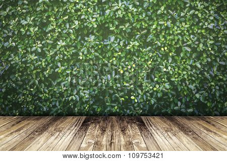 Green Leaves Wall And Old Wood Floor