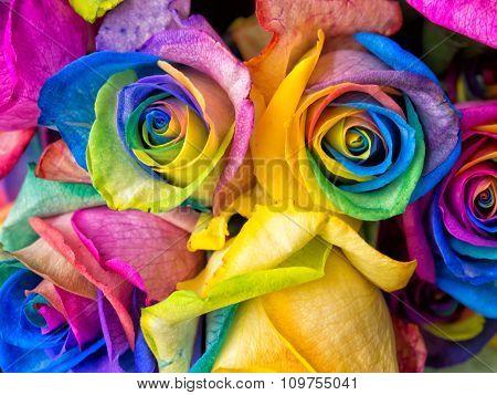 Rainbow Roses Close-up